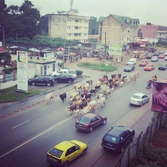 14h29 ce jour...à Abidjan-Cocody 8è tranche..en plein boulevard...au niveau de la CNPS et le CASH CENTER, photo de Fulbert Gadou